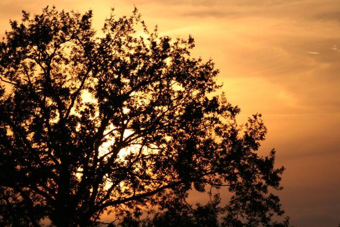 Baum am Sommerabend