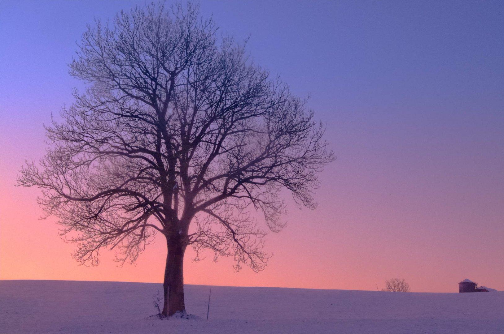 Baum am Wallersee