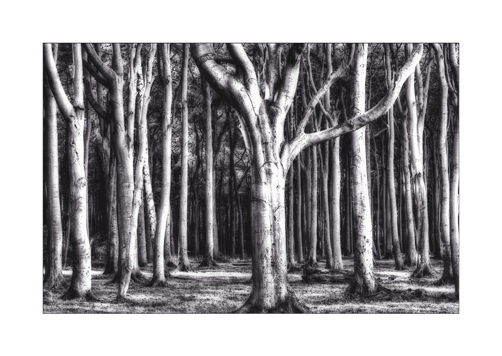 Baum an Baum...