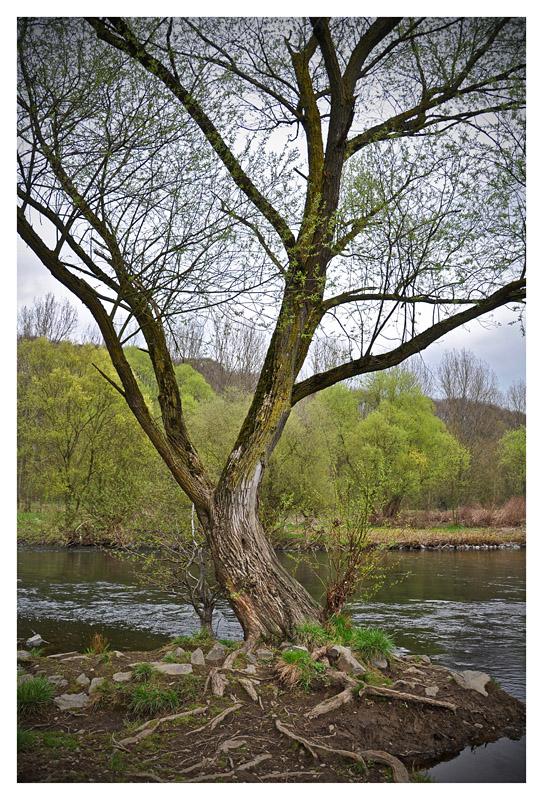 Baum an der Lenne in Hagen Hohenlimburg
