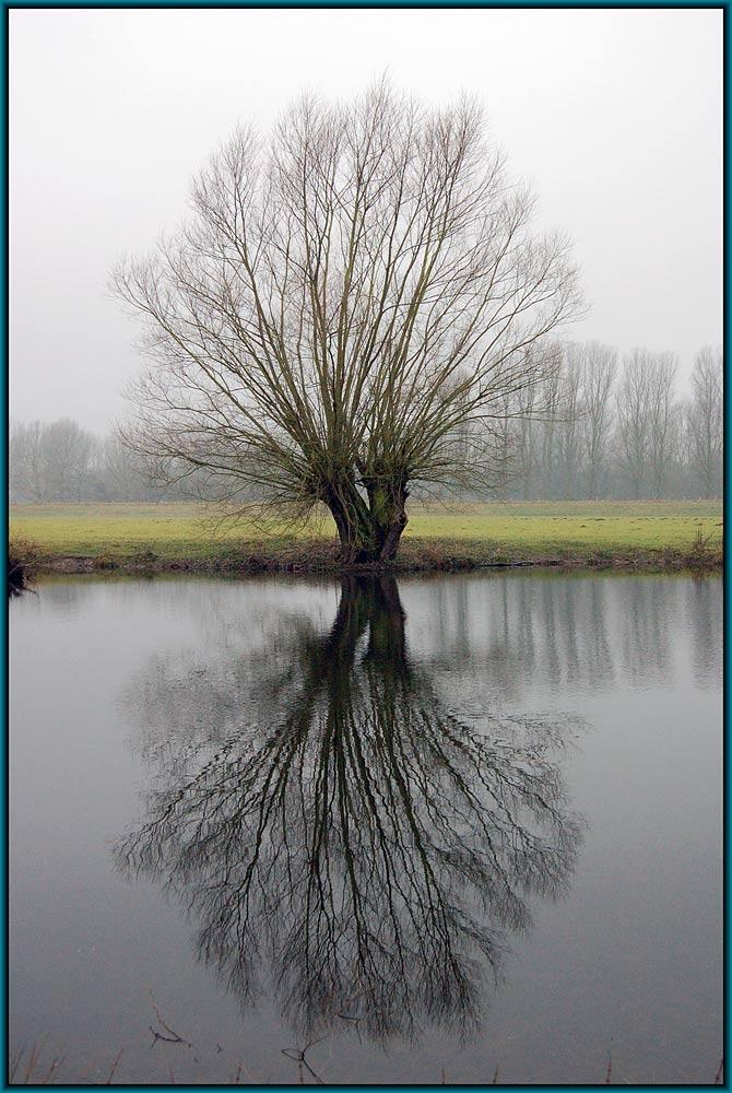 Baum an der Ruhr