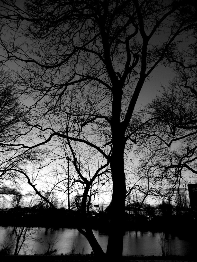 Baum an der Weser(2)
