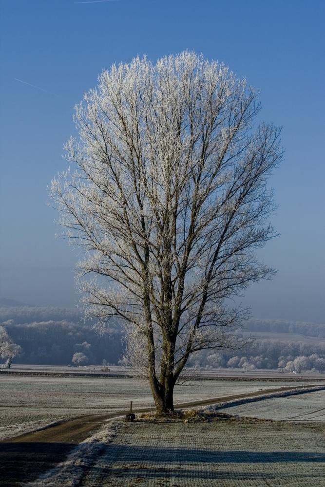 Baum an einem kalten Morgen