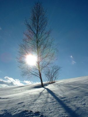 Baum an einem Winternachmittag