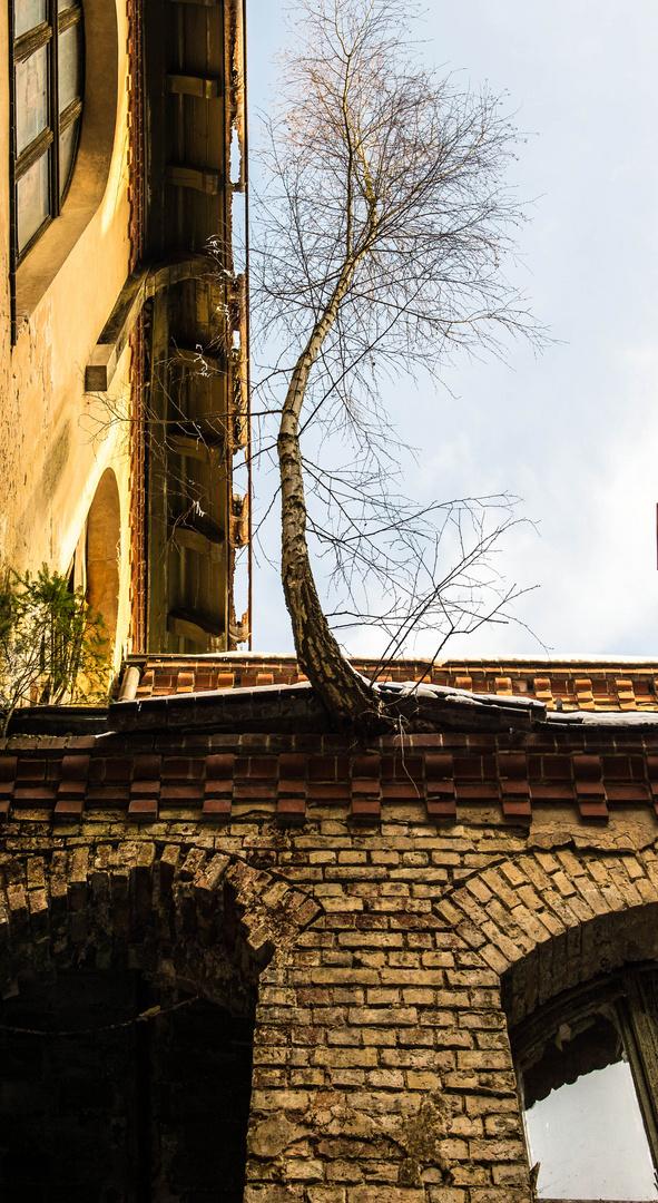 Baum an Wand