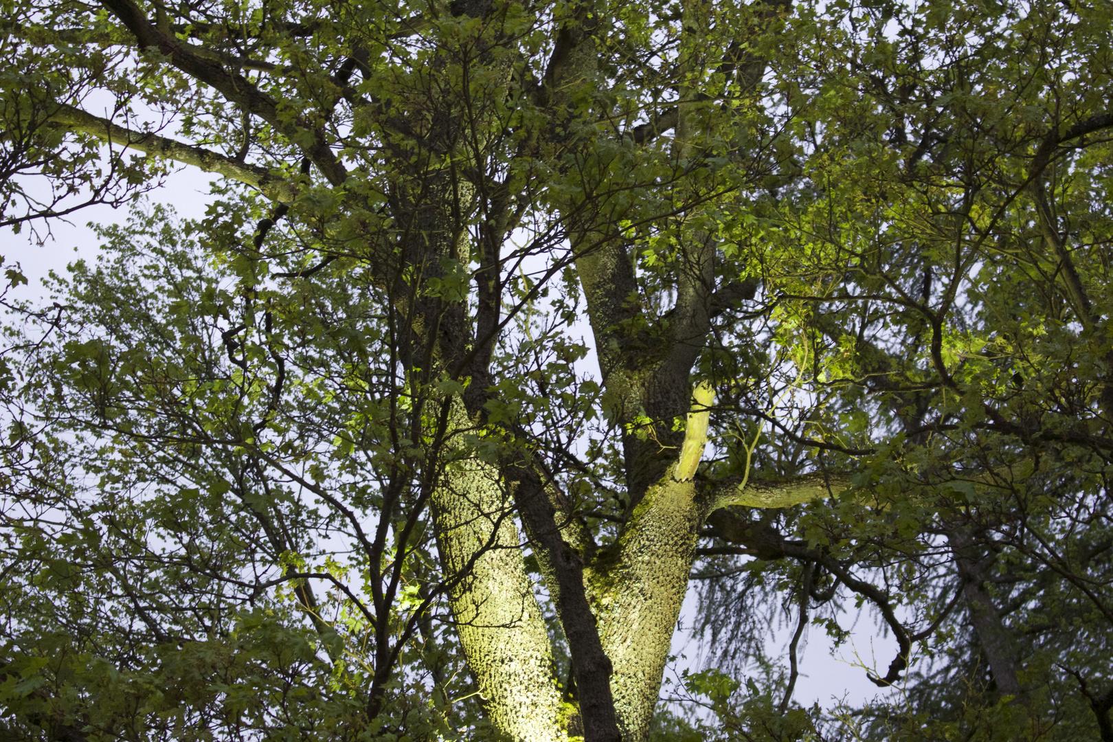 Baum angestrahlt