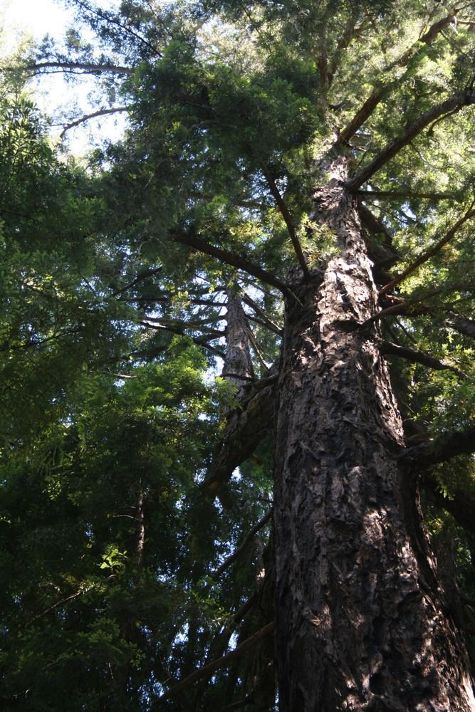 Baum auf Baum