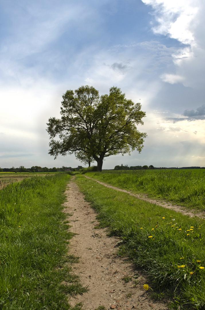 Baum auf dem Acker