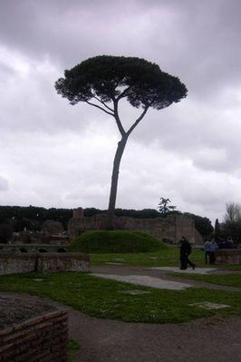 Baum auf dem Forum Romanum