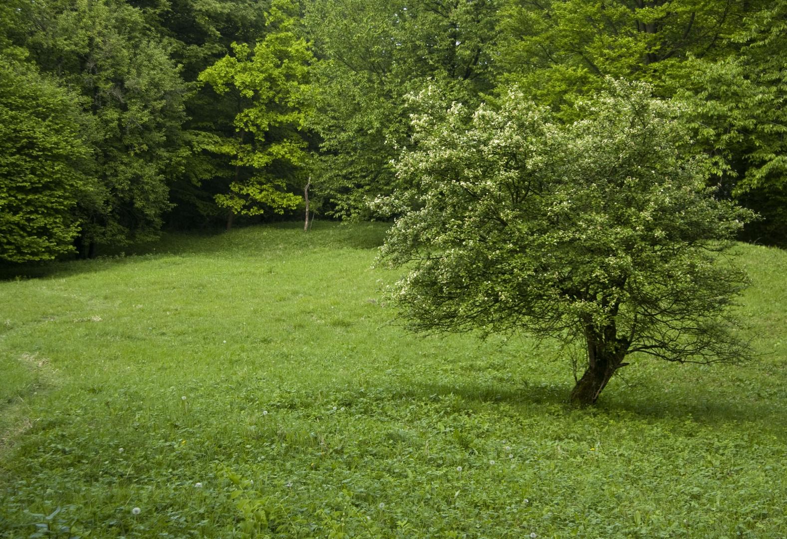 Baum auf dem Mackenberg in Oelde/Sünninghausen