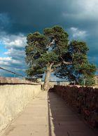 Baum auf dem Schloss