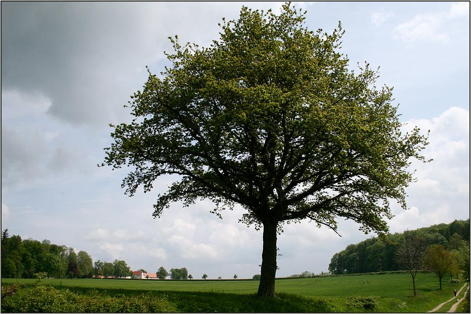 Baum auf der Alb