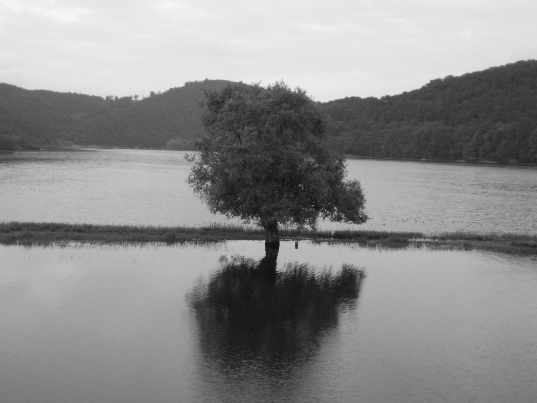Baum auf Irrwegen