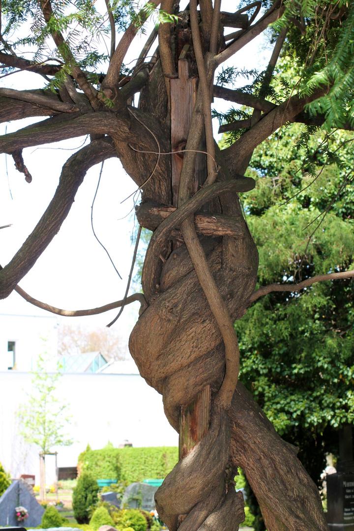 Baum auf Umwegen