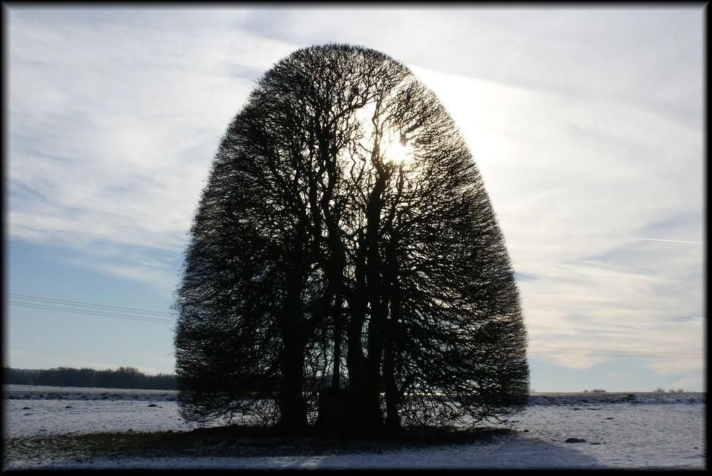 Baum!!!!