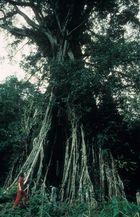 Baum-Begegnung