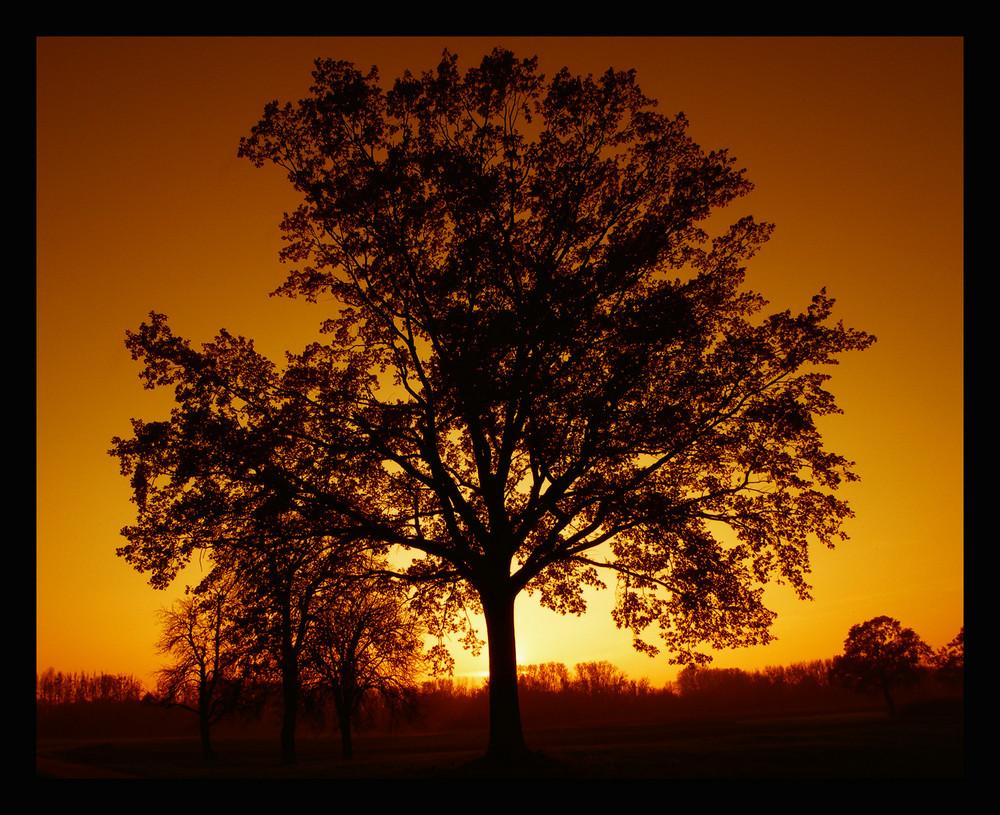 Baum bei Abendrot