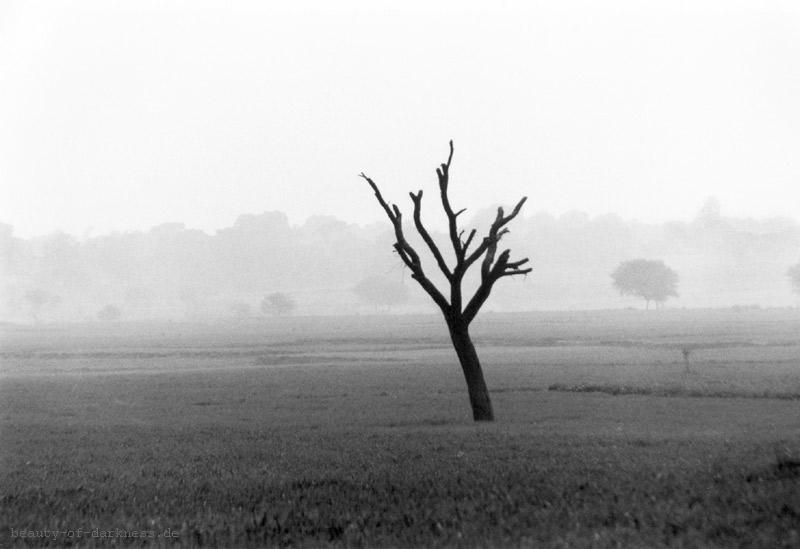 Baum bei Allahabad