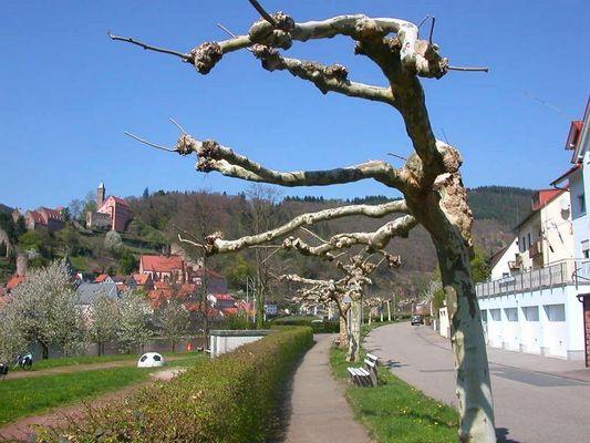 Baum bei Hirschhorn am Neckar