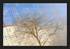 Baum bei Kirche