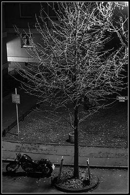 Baum bei Nacht ...