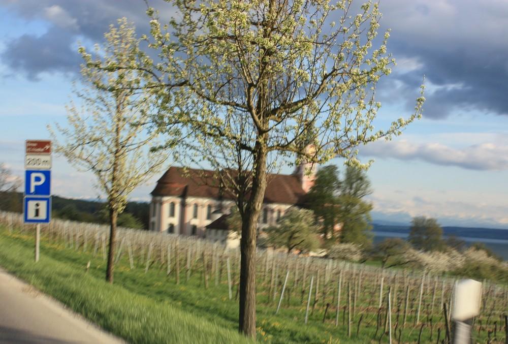 Baum - Birnau