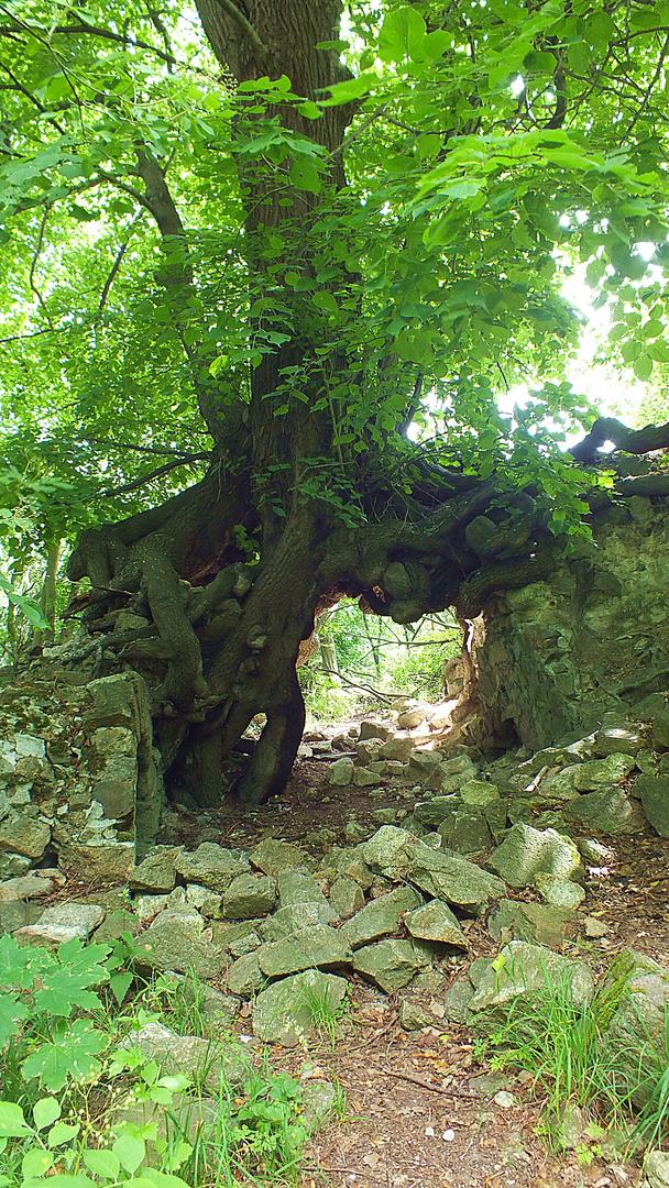 Baum Brücke II