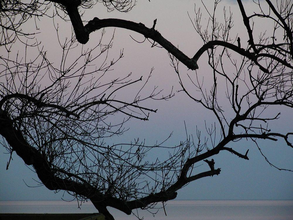 Baum, Bulgarien von Nixwierunter