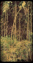 Baum,...
