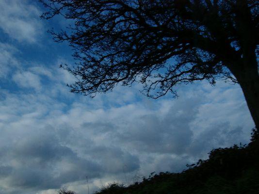 -Baum-