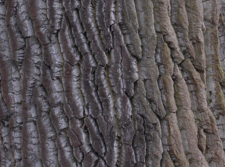 Baum...