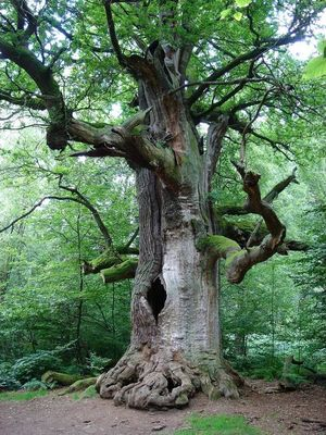 >>>)))baum-der-bäume(((<<<