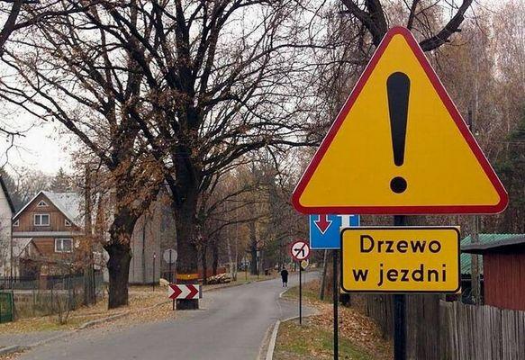 Baum der Erkenntnis in Opole