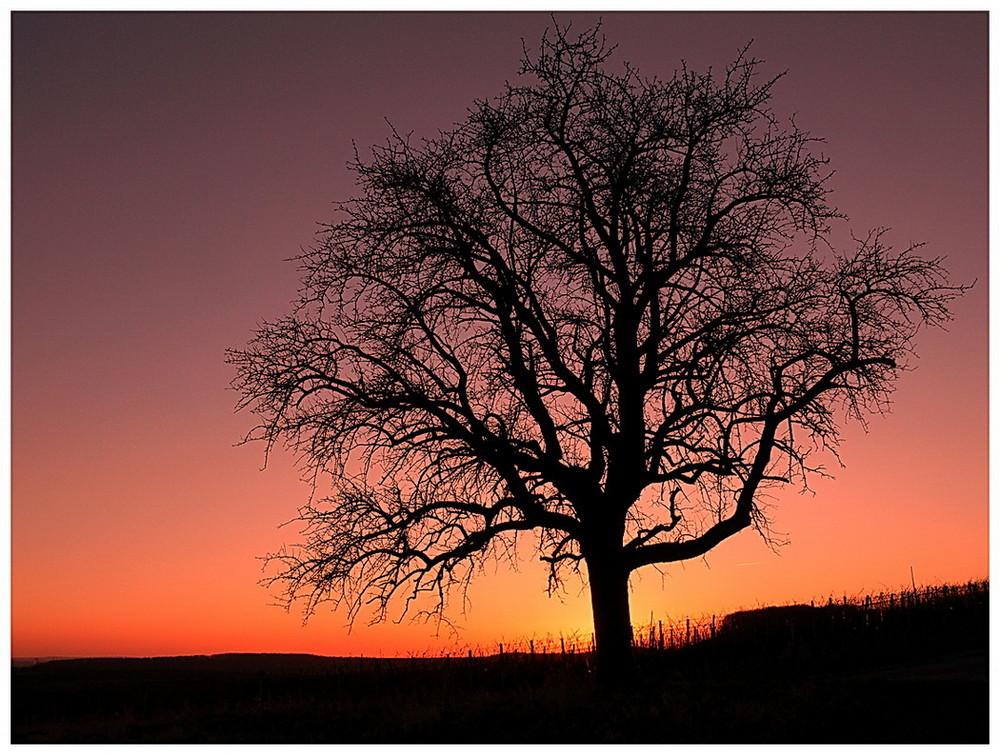*Baum der Erleuchtung*