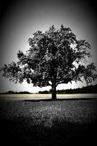 Baum der Glückseligkeit
