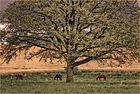 --- Baum der Pferde ---