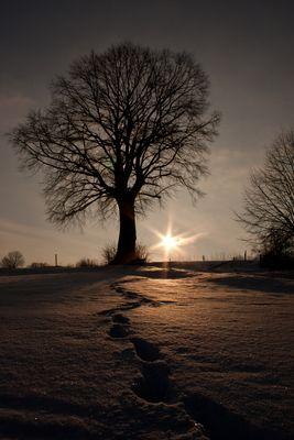 Baum der stille