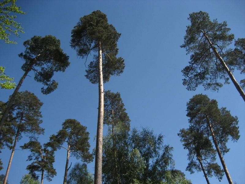 Baum des Jahres 2007
