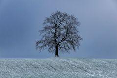 Baum des Lebens...