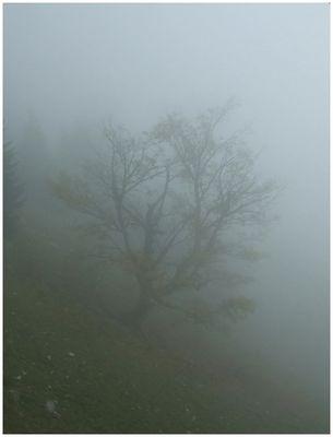 Baum, diffus