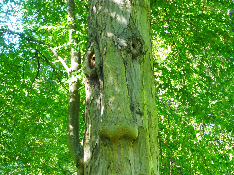 Baum ?