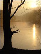 Baum Eis Morgensonne