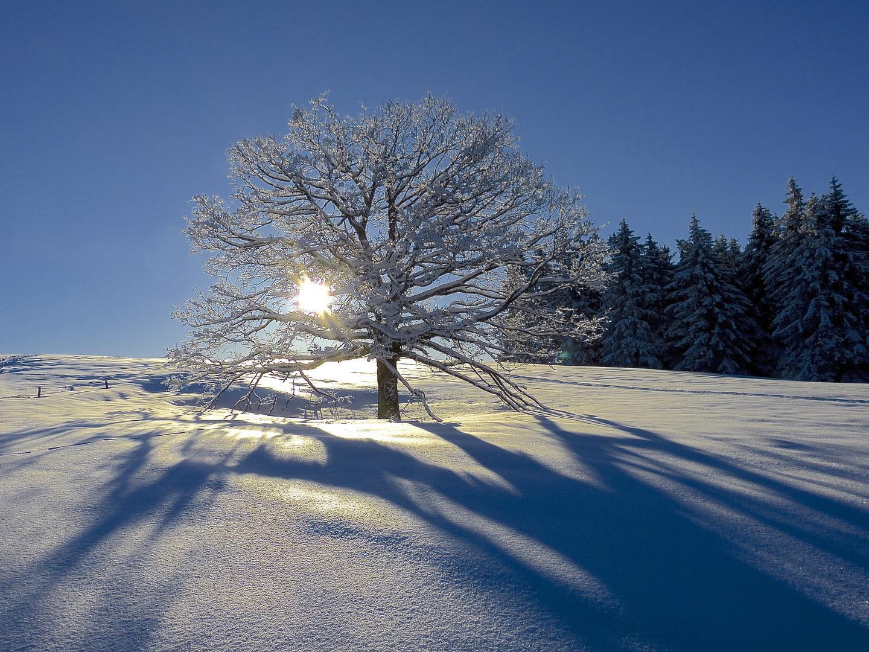 Baum erfreute sich in der Morgenwärme!