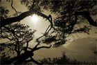 Baum-Erkenntnis I