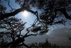 Baum-Erkenntnis I (Original)