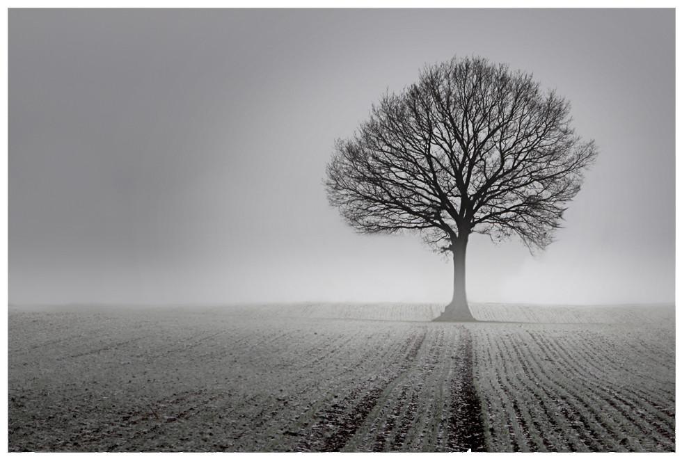 Baum || Feld