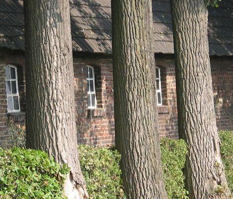 Baum, Fenster, Baum, Fenster....