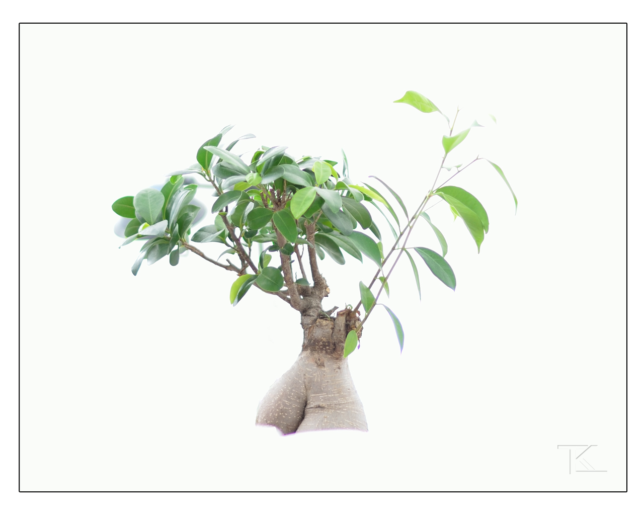 Baum?!