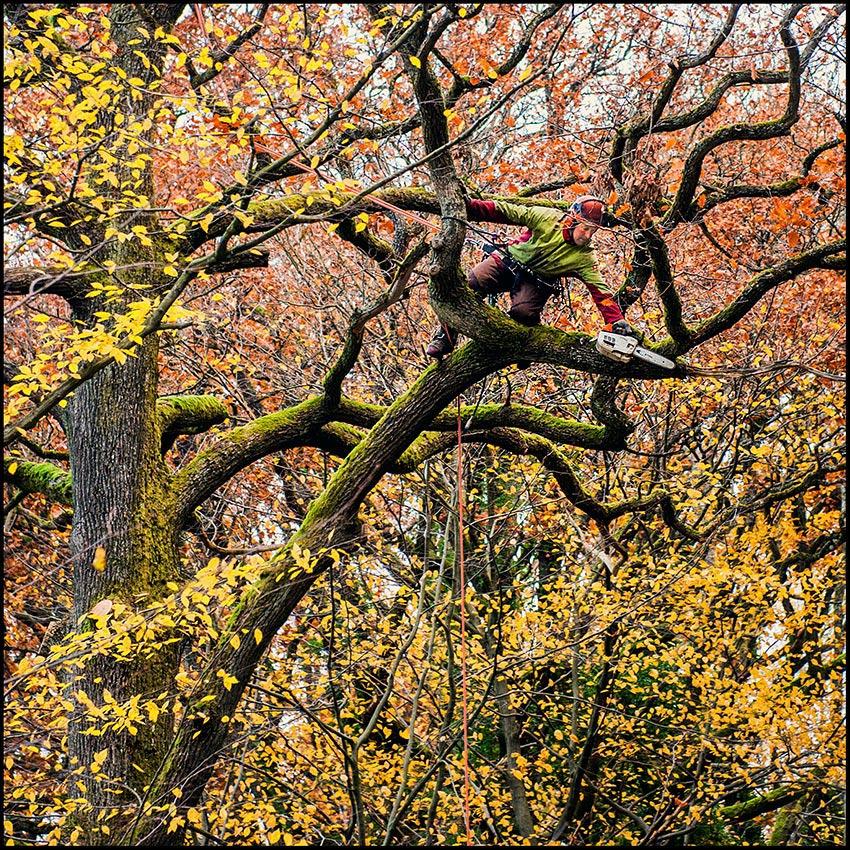 Baum-Friseur
