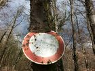 Baum frisst Fahrverbotsschild